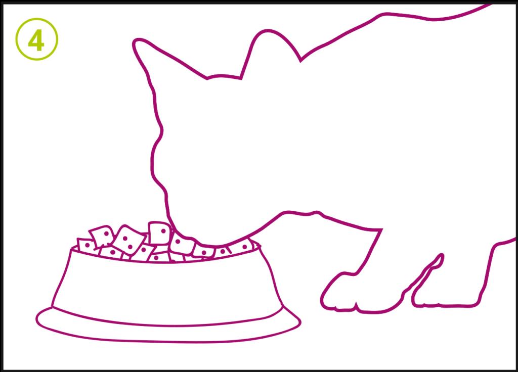 Porus One - Step 4